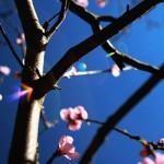Photography/Fotos von/by Timur Manyas